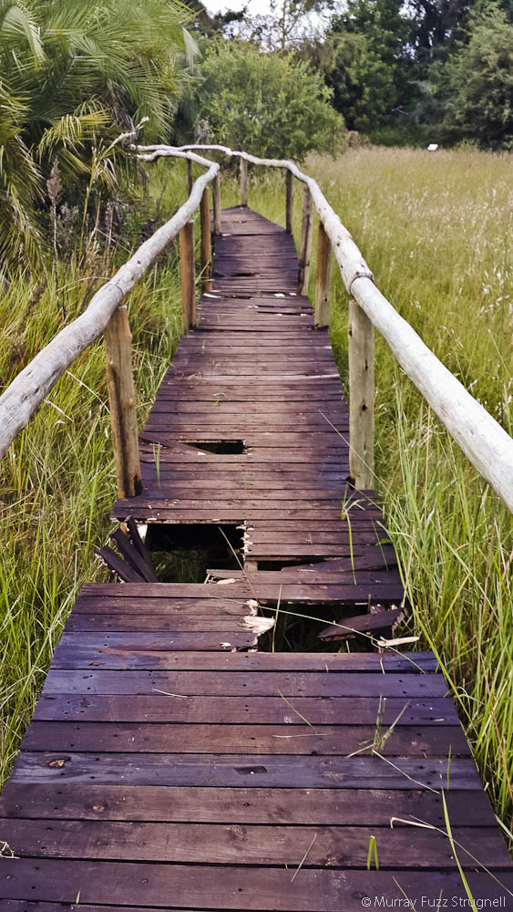 Mopiri Boardwalk-3