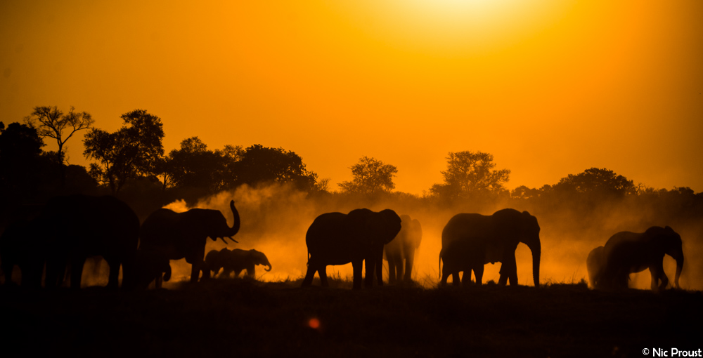 Elephant Sunset-2