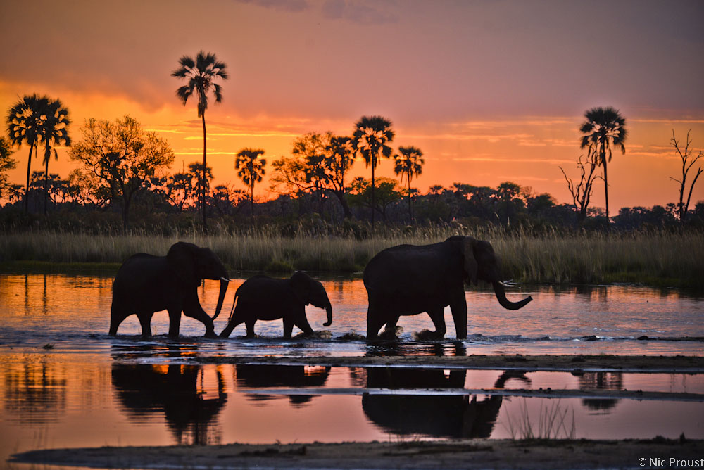 Celebrating Elephants Of Southern Africa