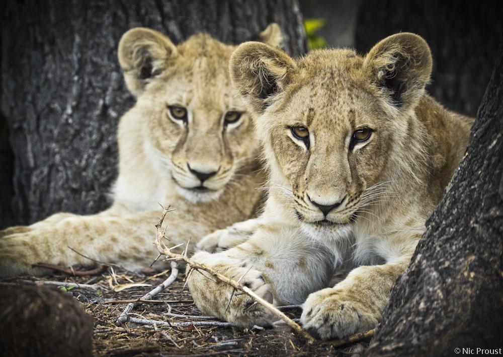 Moporota Cubs