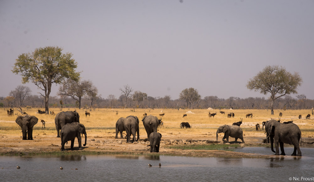 Hwange Magic-10