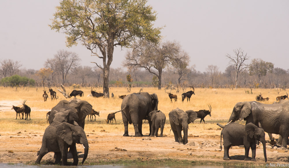 Hwange Magic-4