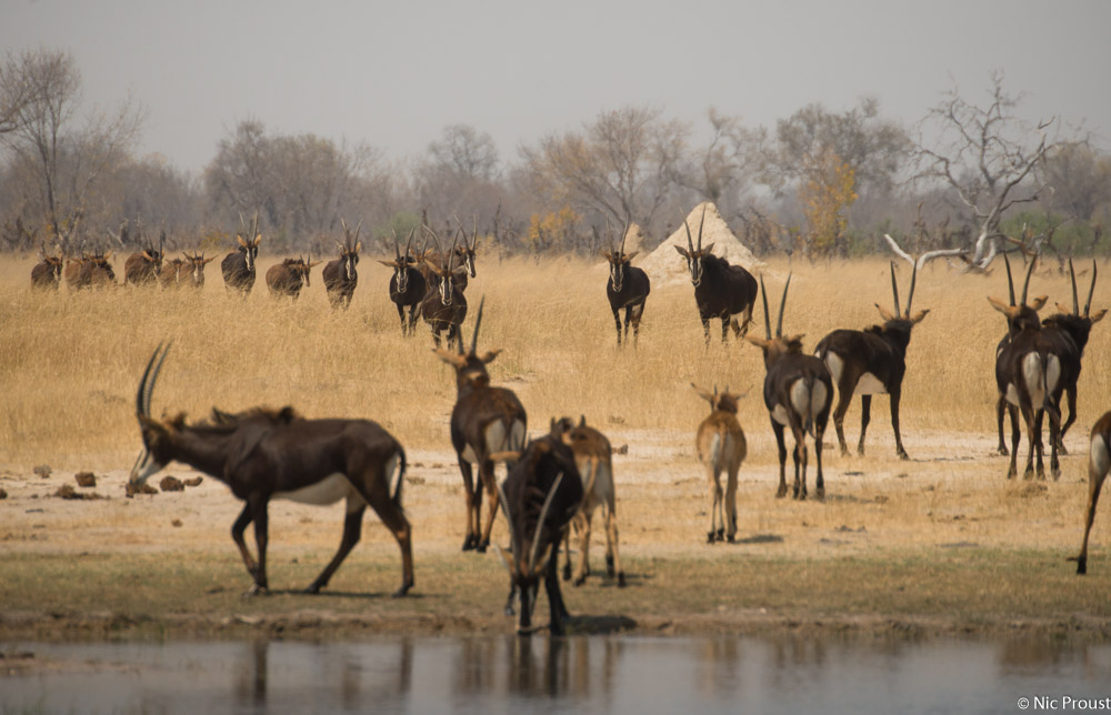 Hwange Magic-8